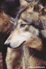 gideon-wolf-4_orig